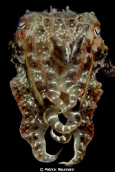 cuttlefish in papua taken with Canon 400D/Hugyfot by Patrick Neumann
